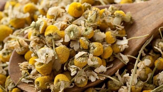 Chamomile Tea Benefits Your Skin in Many Ways
