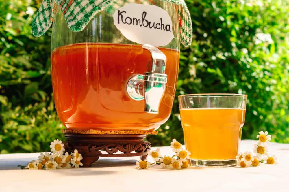 How to Choose the Best Tea for Kombucha